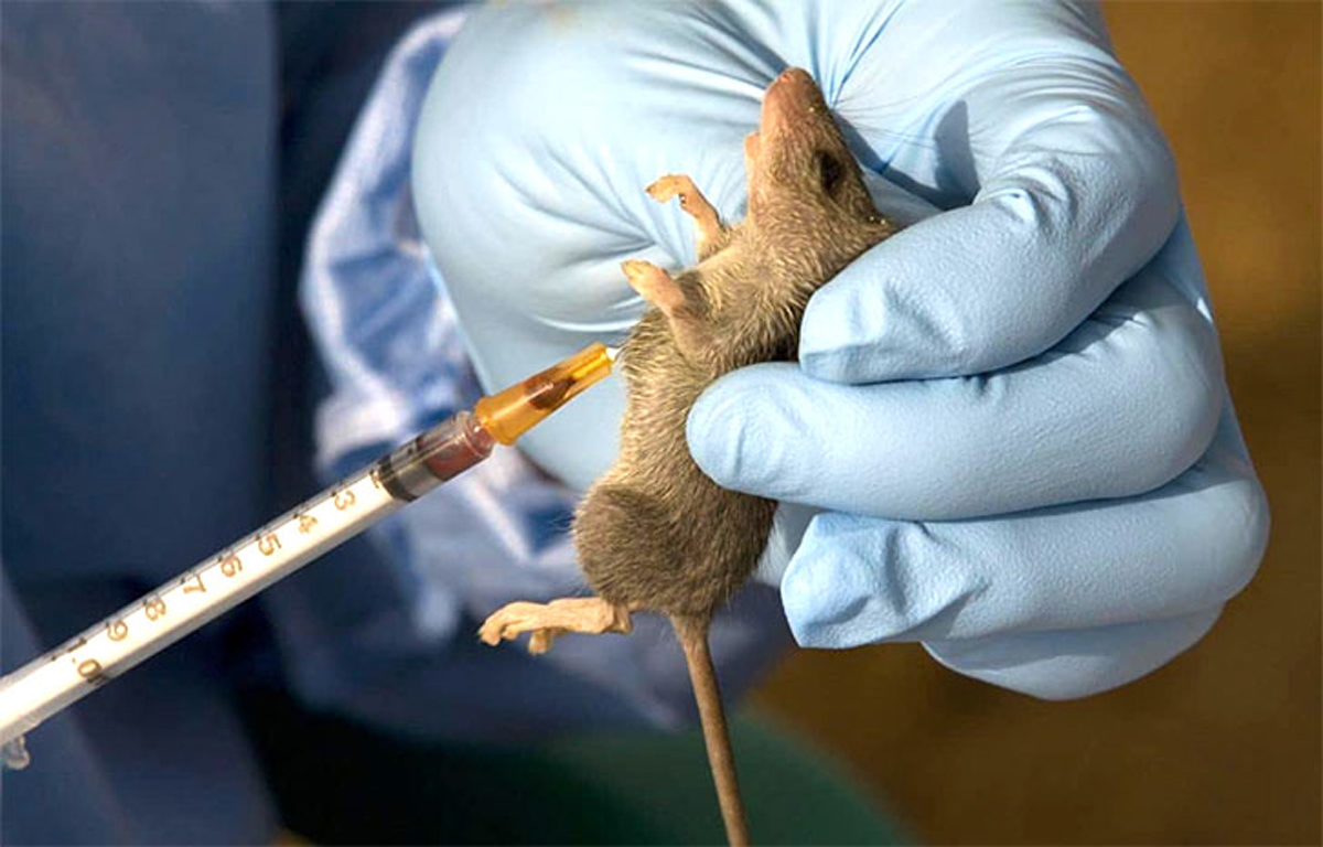 BUSTED: Reason researchers are yet to get Lassa fever vaccine